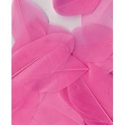 PLUMES ROSE CLAIR